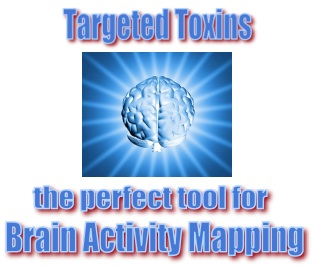 Targeted Toxins-the perfect tool for Brain Activity Mapping